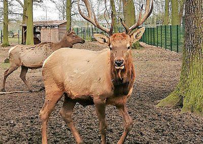 Tierpark Weisswarte